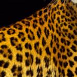 61esimo Festival del film di Locarno: un leopardo al passo coi tempi