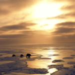 Earth: un viaggio in 365 giorni attorno all'artico