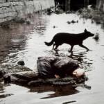[IN]ATTUALI / Stalker, l'invisibile agli occhi : il capolavoro di Andrej Tarkovskij.